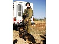 Immagine di 1:16 K-9, Israeli Police Team Officer with dog (100% new molds)